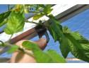 Planthangers (10 stuks)